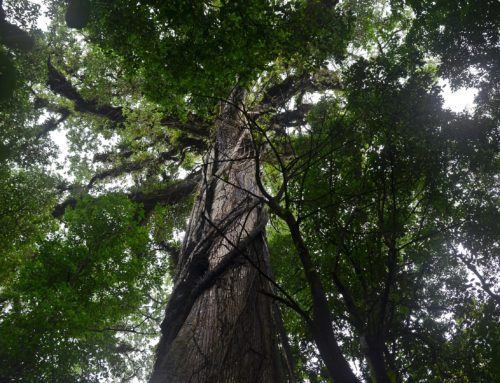 I NOSTRI VIAGGI: Costa Rica di Ilaria Corsetti